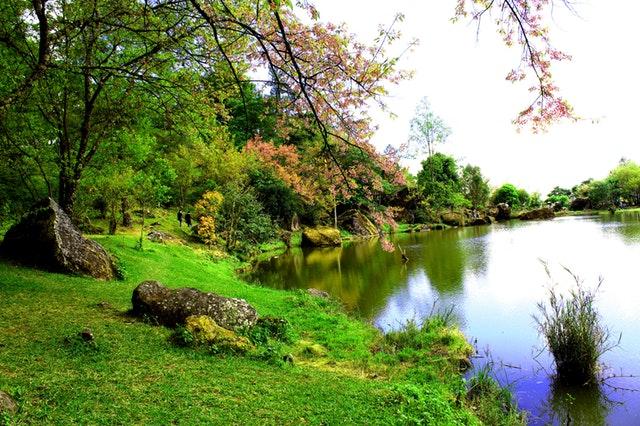 photo-of-lake-side-805452.jpg